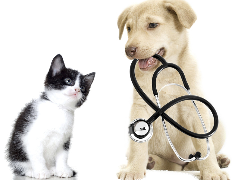 Pet Protection: Insuring Your Pet for The Years Ahead
