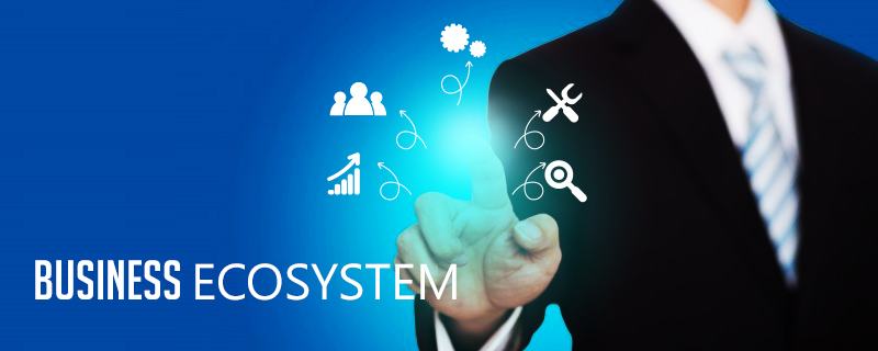 How to focus on business ecosystem in Singapore?